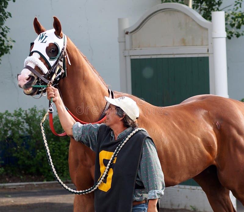 Pferd und Lenker an der Rennbahn stockfotografie
