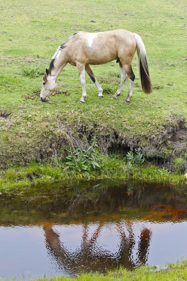 Pferd und Reflexion lizenzfreies stockbild