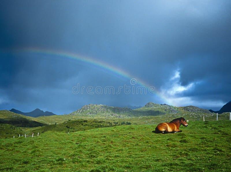 Pferd und Regenbogen lizenzfreies stockbild