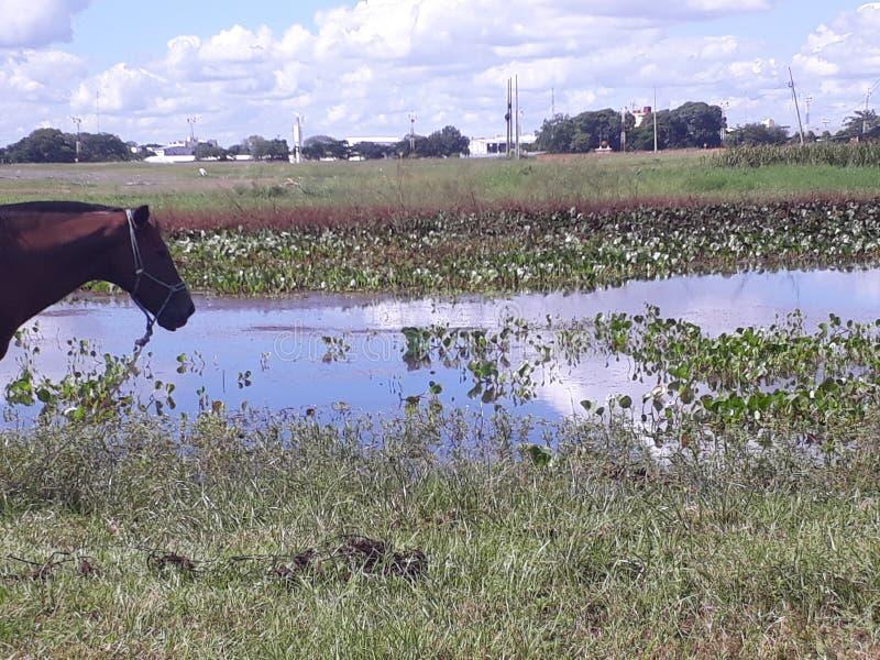 Pferd und See stockbild