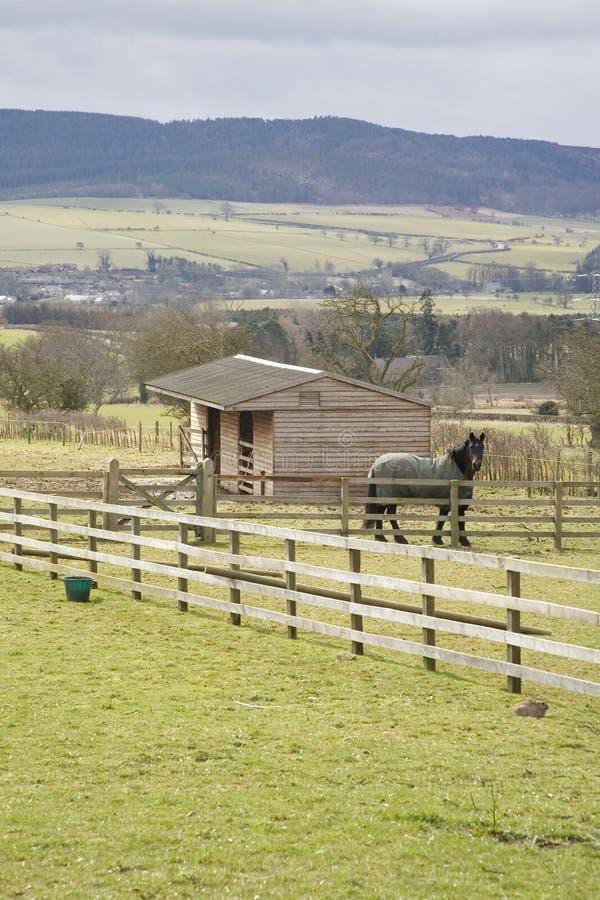 Pferd und Ställe auf dem Gebiet lizenzfreie stockbilder