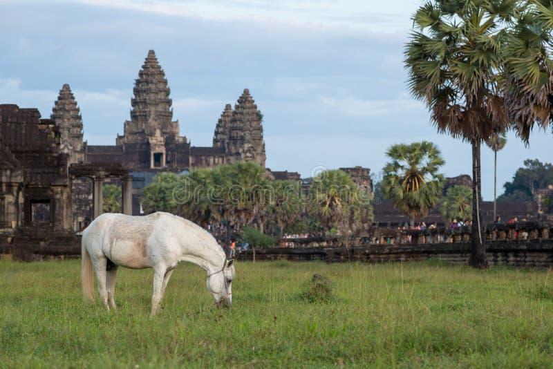 Pferd und Tempel stockfoto