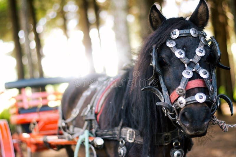 Pferd und Trainer stockbild