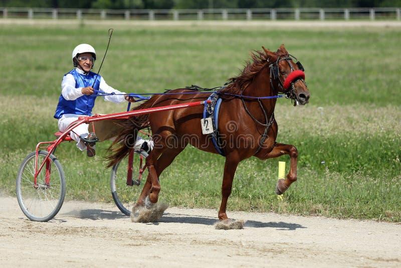 Pferd während des Trabrennens stockfotografie