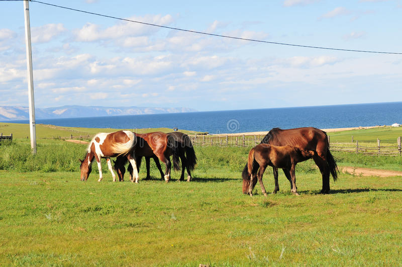 Pferde. lizenzfreie stockfotos