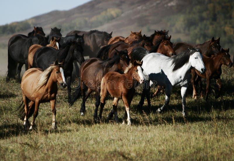 Pferde stockfotos