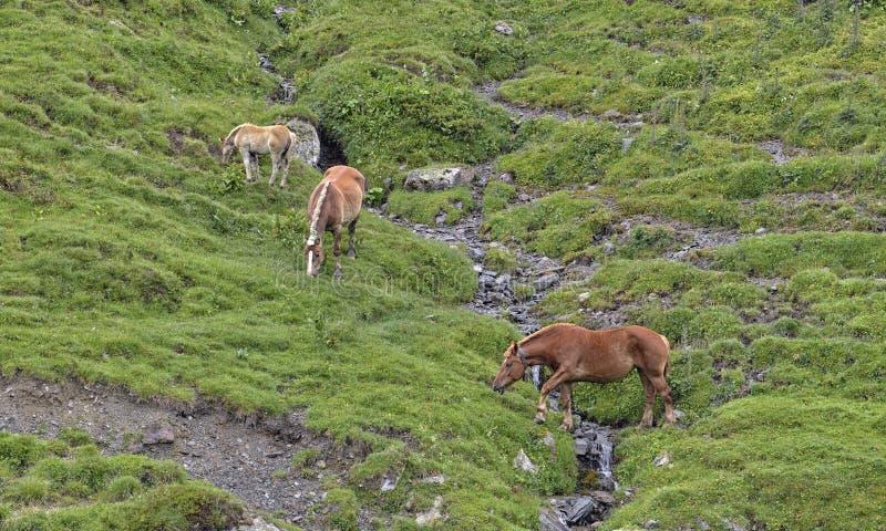 Download Pferde stockfoto. Bild von gruppe, nave, weide, wiese - 96929260