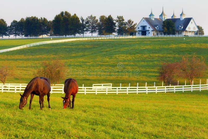 Pferde auf dem Bauernhof stockfotos