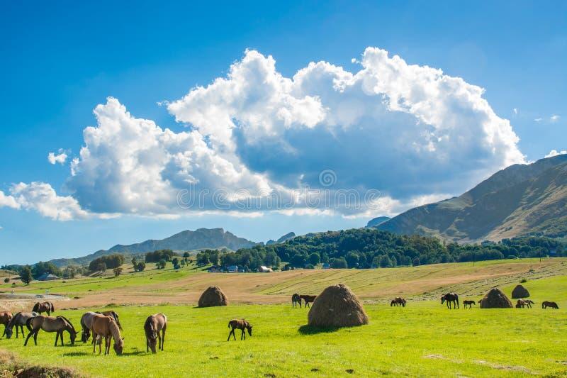 Pferde auf dem erntenden Feld lizenzfreie stockfotos