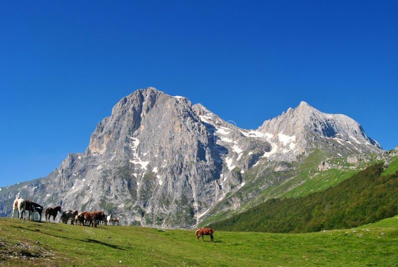 Pferde auf dem Gran Sasso lizenzfreie stockfotos