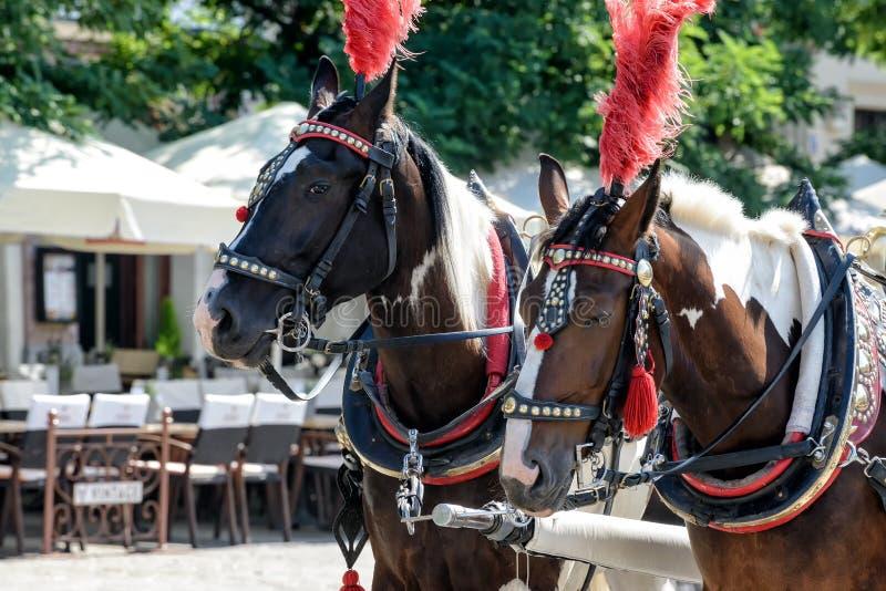 Pferde auf dem Hauptplatz von Krakau stockbild