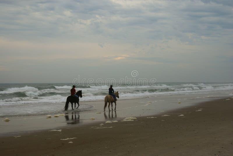 Pferde auf dem Strand lizenzfreies stockfoto