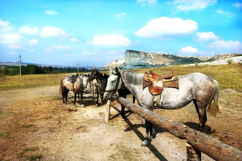 Pferde auf der Ranch lizenzfreie stockbilder