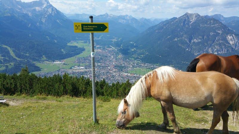 Pferde auf einem Berg lizenzfreie stockfotografie
