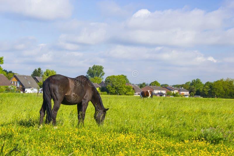Pferde auf einer Frühlingsweide stockfotos