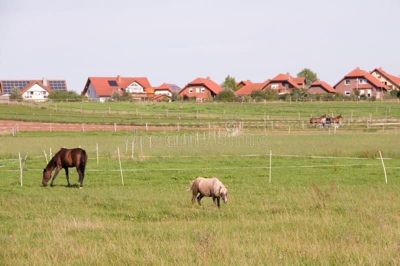 Pferde auf einer Weide. Pony. stockfotografie