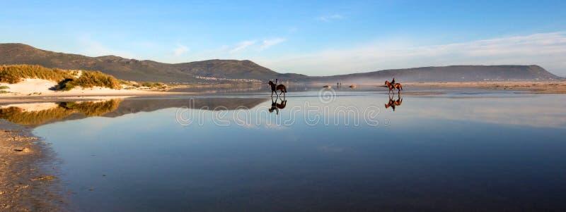 Pferde auf Strand stockfoto