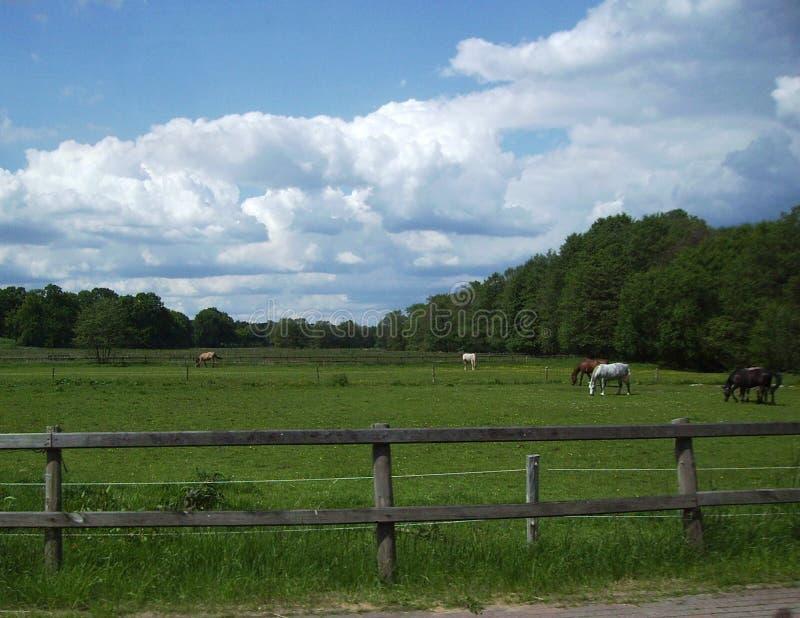 Pferde auf Weide lizenzfreie stockbilder