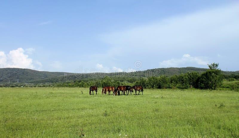 Pferde, Berge, Himmel stockbild