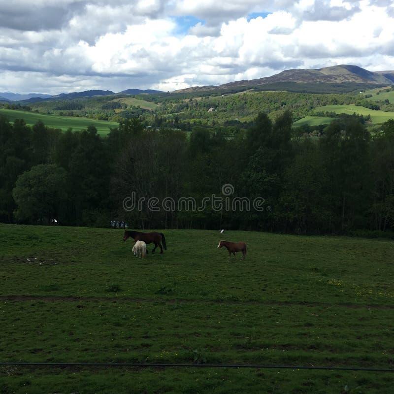 Pferde an Crieff-Hydro, Schottland lizenzfreie stockfotografie