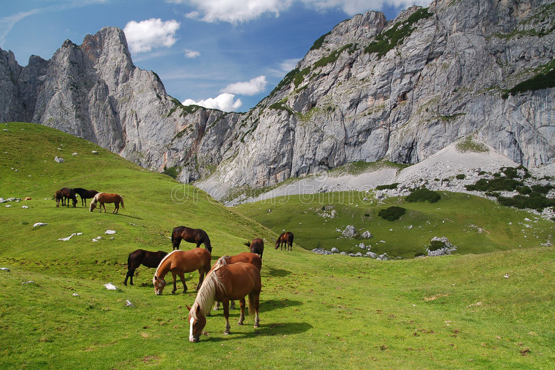 Pferde in den Alpen stockfotografie
