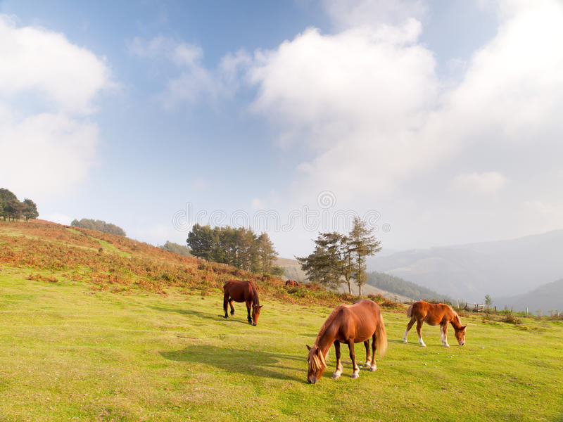 Pferde in den Bergen stockbild