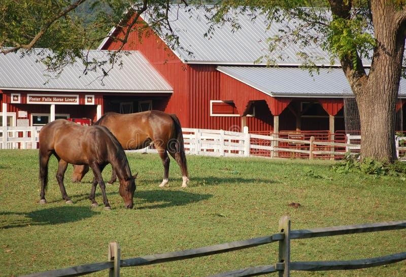 Pferde in den Pflegefällen stockfotografie