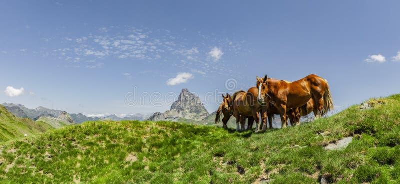 Pferde in den Pyrenäen im Sommer lizenzfreie stockbilder