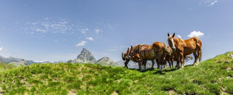 Pferde in den Pyrenäen im Sommer lizenzfreie stockfotos