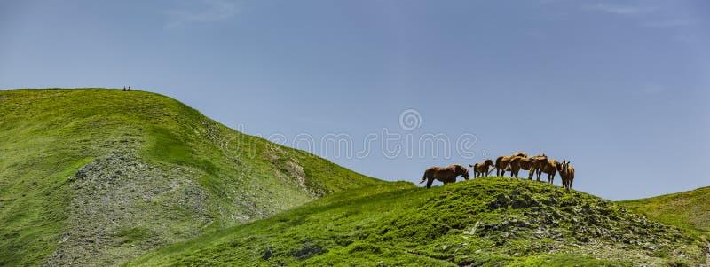 Pferde in den Pyrenäen im Sommer lizenzfreies stockfoto
