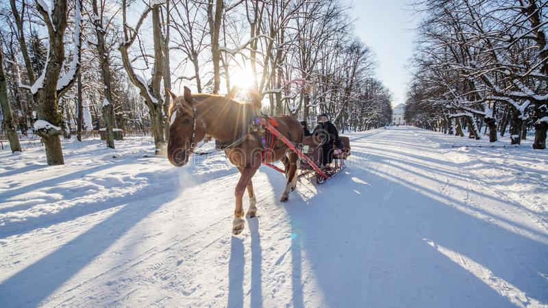 Pferde in den Wintersonnenlichtern, PAVLOVSK, St. PETERSBURG, RUSSLAND - 21. Februar 2018 stockfotografie