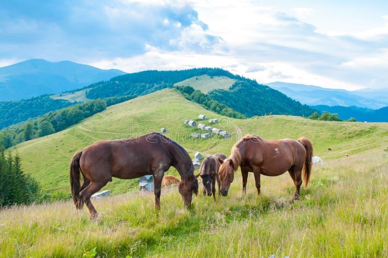 Pferde in der Natur Familie von Pferden in der Natur lizenzfreie stockfotos