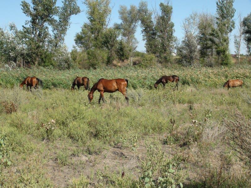 Pferde in der Weide lizenzfreie stockfotos