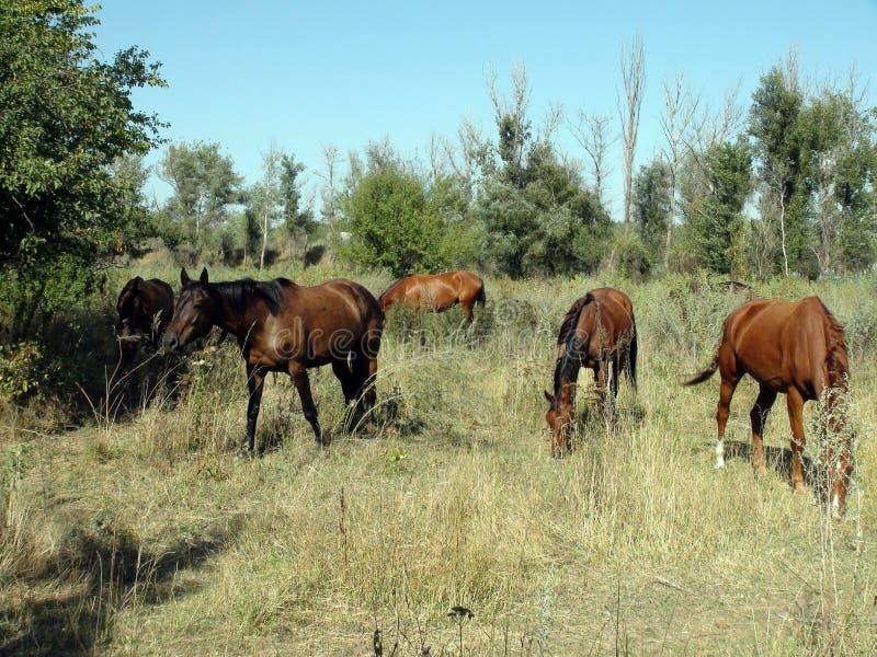 Pferde in der Weide lizenzfreie stockfotografie