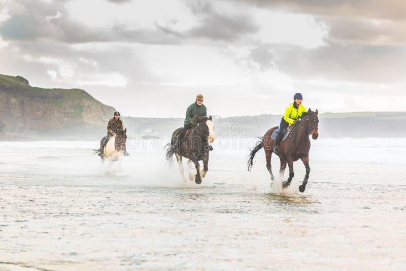 Pferde, die auf den Strand galoppieren lizenzfreies stockfoto