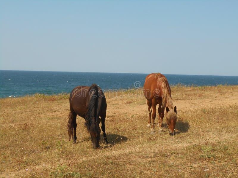 Pferde, die auf der Steppe weiden lassen lizenzfreies stockfoto