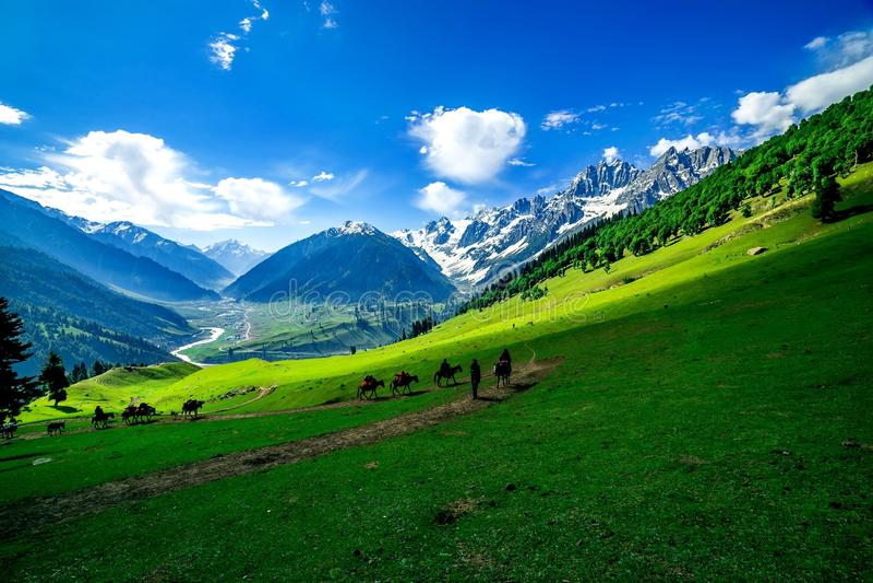Pferde, die auf einem Hügel, Kaschmir weiden lassen lizenzfreie stockbilder