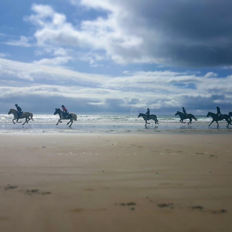 Pferde, die auf einen Strand galoppieren lizenzfreies stockfoto