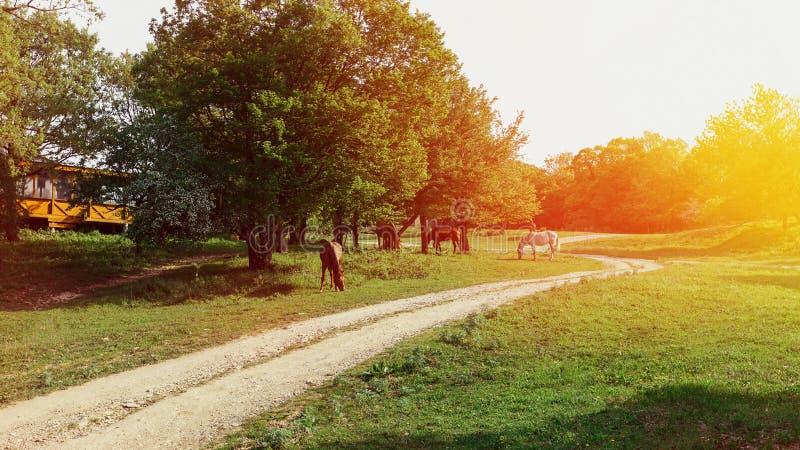 Pferde, die auf grüner Wiese an einem sonnigen Tag weiden lassen Landwirtschaftliche Landschaft lizenzfreie stockfotografie