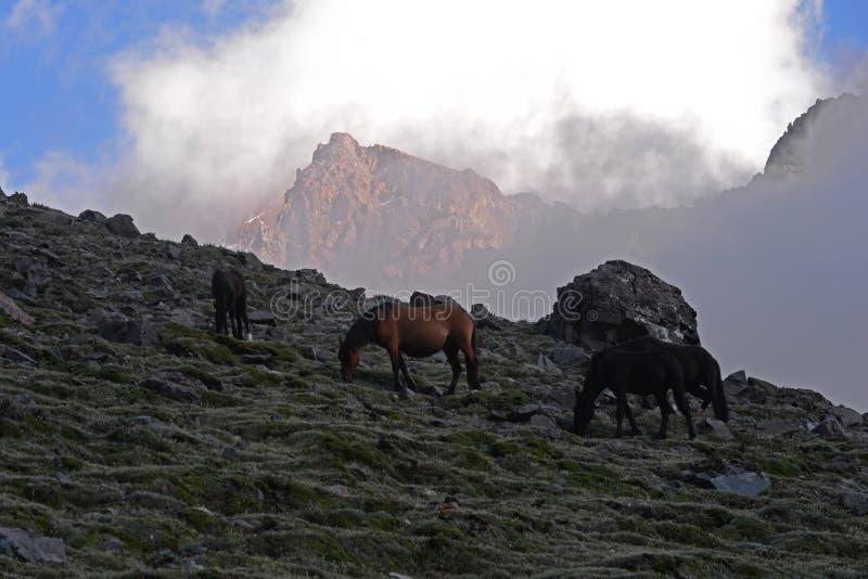 Pferde, die in den Bergen weiden lassen lizenzfreie stockbilder
