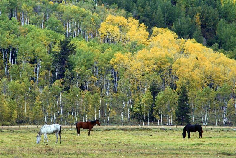 Pferde, die in der großartigen Teton Wiese weiden lassen lizenzfreie stockfotografie