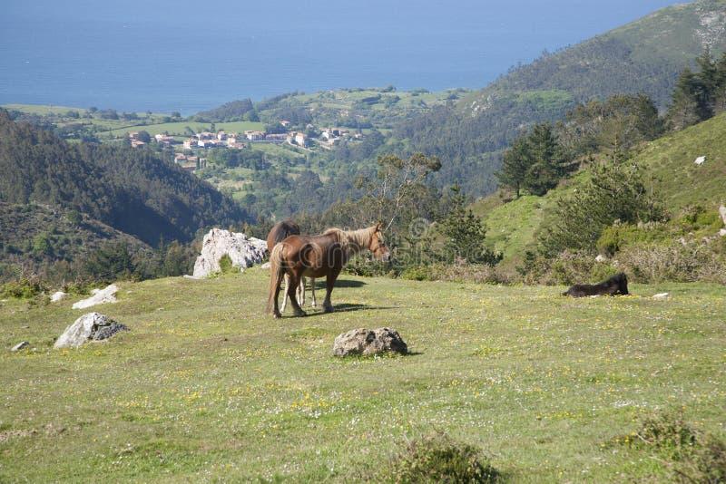 Pferde, die an der Wiese weiden lassen stockfoto