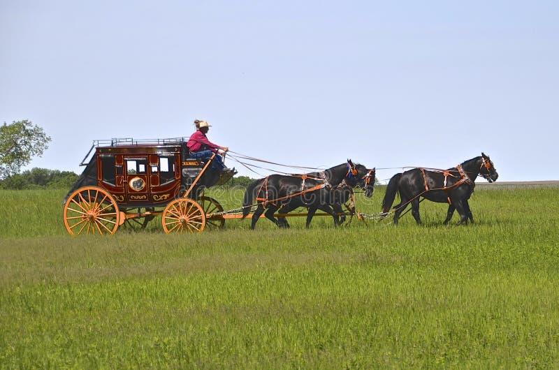 Pferde, die einen Stagecoach ziehen lizenzfreie stockbilder