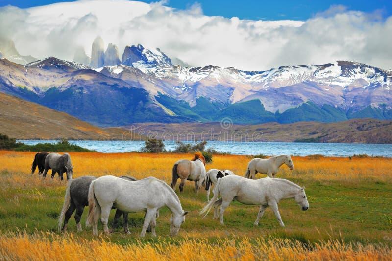 Pferde, die in einer Wiese weiden lassen stockfotos