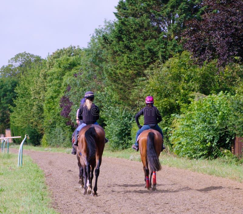 Pferde, die nach Hause vorangehen lizenzfreies stockbild