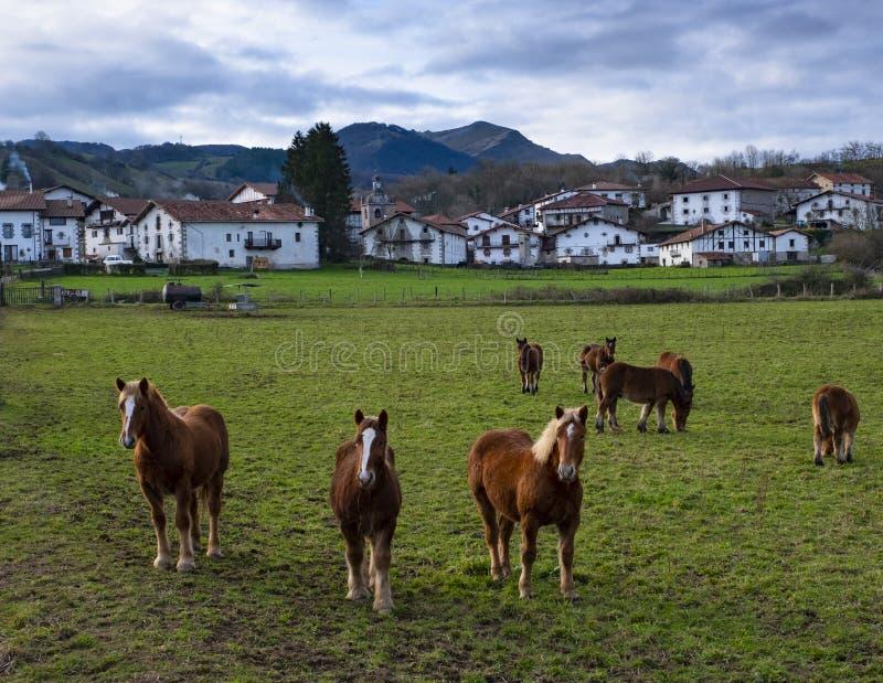 Pferde, die nahe der Stadt von Baraibar weiden lassen stockfoto