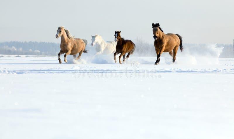 Pferde, die in Winter laufen stockbild