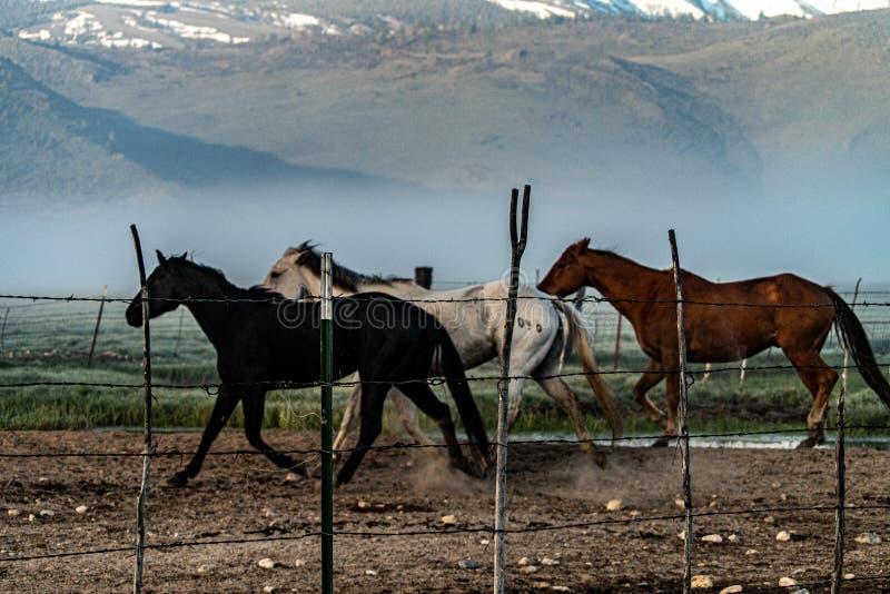 Pferde, die zur Ranch-Hürde nahe Bridgeport, Kalifornien zurückgehen lizenzfreie stockfotos