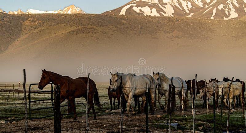 Pferde, die zur Ranch-Hürde nahe Bridgeport, Kalifornien zurückgehen lizenzfreies stockfoto