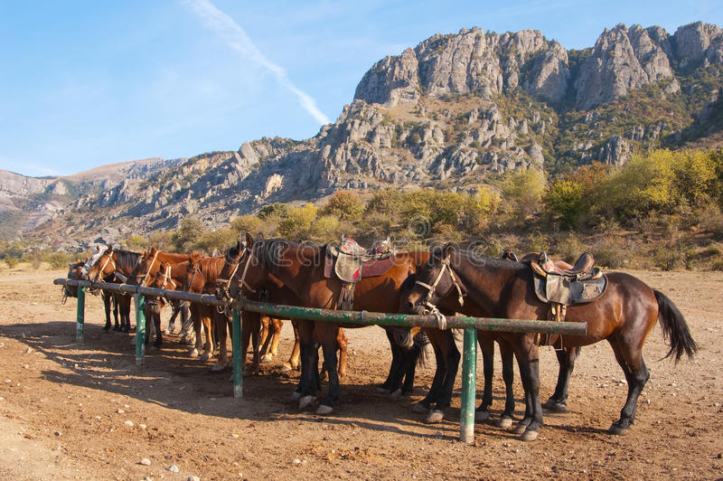 Pferde an einem hitching Pfosten lizenzfreies stockbild